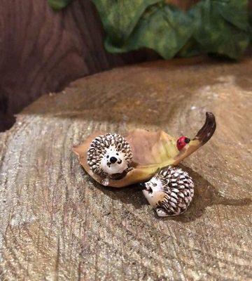 Miniature Twin Hedgehog On Leaf