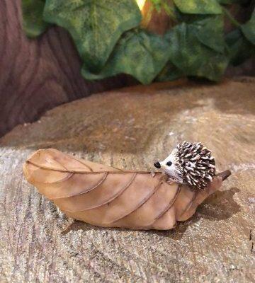 Miniature Hedgehog On Leaf